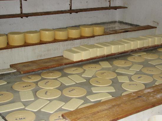 Carmelo Resort & Spa, A Hyatt Hotel: Cheese in production