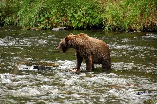 Russian River-billede