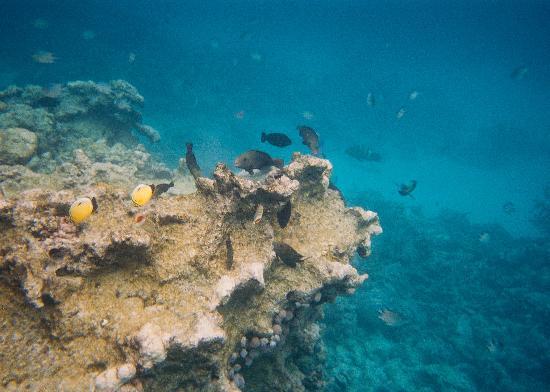 Harmony Makadi Bay Hotel & Resort: greta snorkelling- beware of the jellyfish