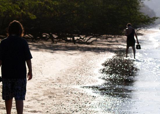 Allegro Papagayo: volcanic beach - sparkles