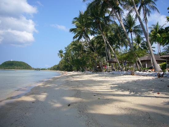 Samui Amanda Resort : The beach at Samui Amanda