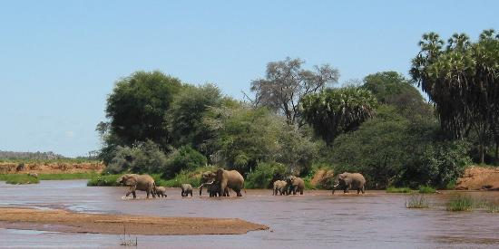 Elephant Crossing in Samburu National Reserve