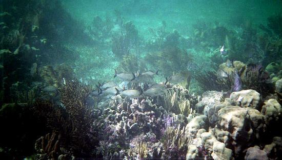 National Reef Park of Puerto Morelos ภาพถ่าย