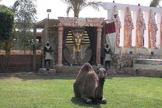 Amar Sina Village : Camel at Amar Sina zoo/park