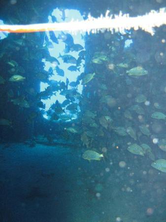 USCG Duane: Fische in der Duane