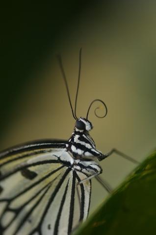 Butterflyhouse Burggarten