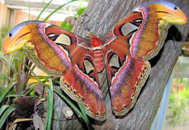 a butterfly Burggarten Butterflyhouse