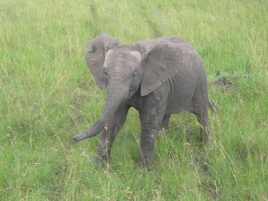 Mpata Safari Club: Baby Elephant