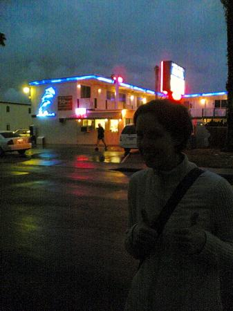 Dolphin Motel: Neon 4 Ever!