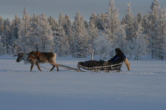 Hotel Harriniva: Reindeer safari