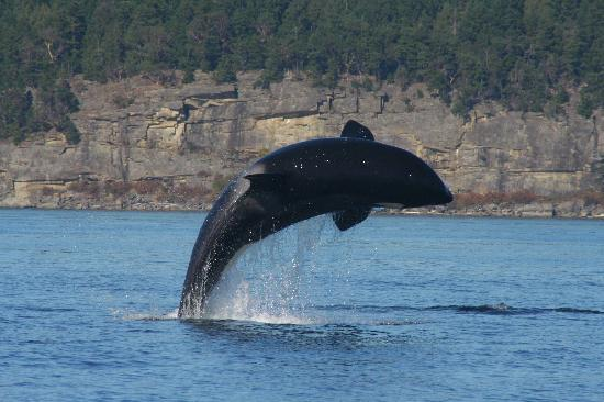 Sidney Whale Watching Photo