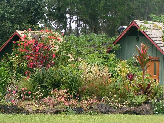 Atiu, Cook Islands: Villas set in lovely garden