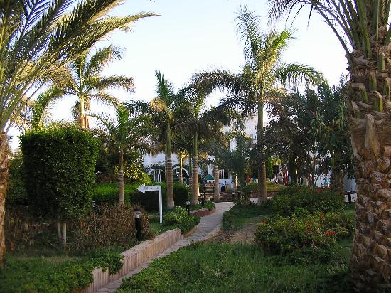 Lovely Egypt