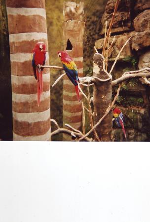 Omaha, NE: Parrots of Lied Jungle