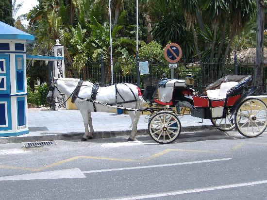 Marbella, Španělsko: Horse and Cart (taxi to the old town)