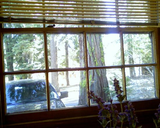 Tahoma Lodge: view from kitchen nook