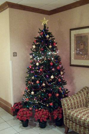 Holiday Inn Express Hotel & Suites New Tampa I-75 Bruce B. Downs: All decked out for Christmas