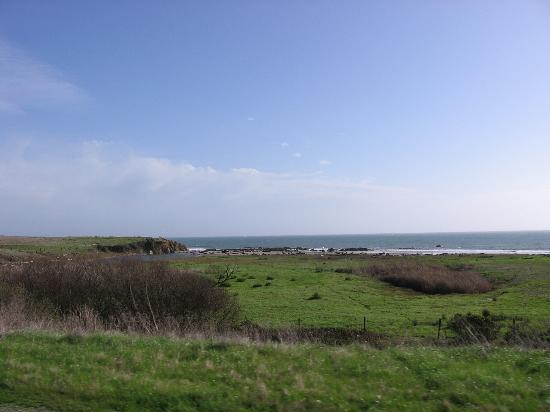San Simeon, Califórnia: Elephant Seals WAY in the distance