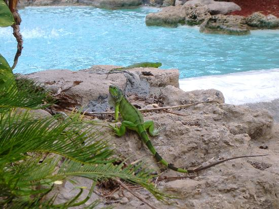 Wyndham Sea Gardens: A resident across from my patio at the Waterfall units