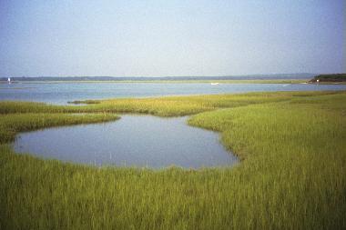 Gray's Beach View