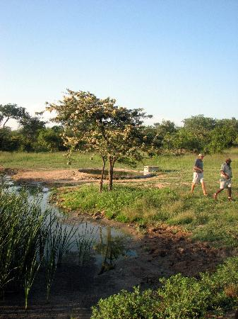 KwaMbili Game Lodge : Looking for Lion tracks