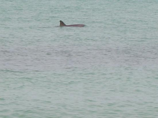 The Casa Blanca: Shark just off beach