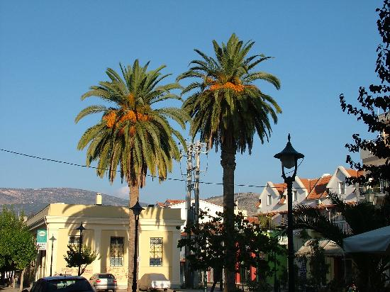Cephalonia, Greece: Huge palms decorate the open spaces
