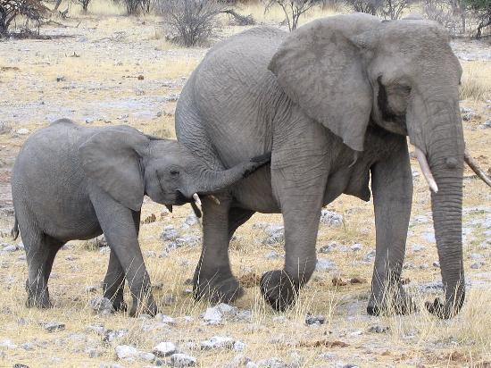 Etosha National Park Photo