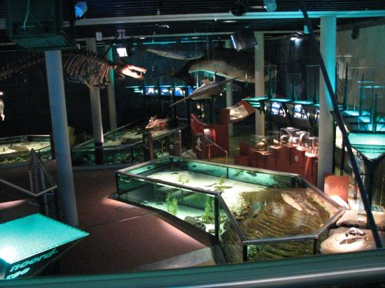 De Koog, The Netherlands: The aquarium area in Ecomare