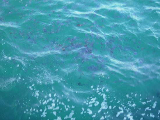 Steigenberger Coraya Beach : jellyfish in sea
