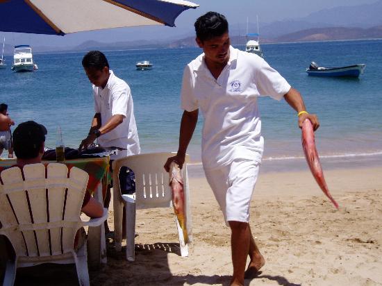 Zihuatanejo, México: Isla Ixtapa--fresh fish for lunch