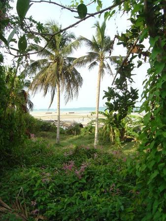 Salome's Garden : the beach from the garden