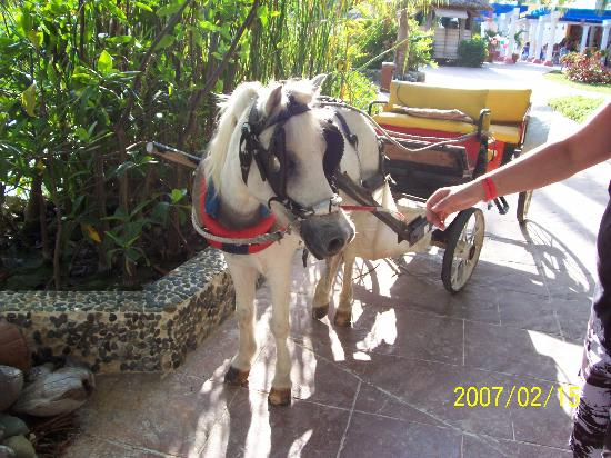 Melia Cayo Guillermo: a little person takes kiddies on tour with the little pony!