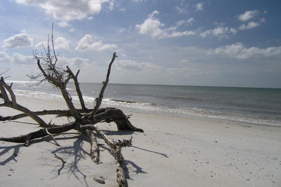 Honeymoon Island State Park: Honeymoon Island
