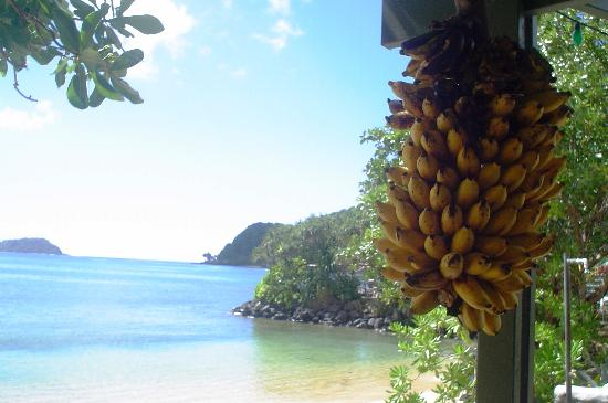 Pago Pago, Amerikaans Samoa: Sadies by the sea, southern view