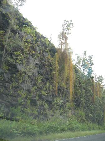 Kilauea Volcano Military Camp: Chain of Craters Drive