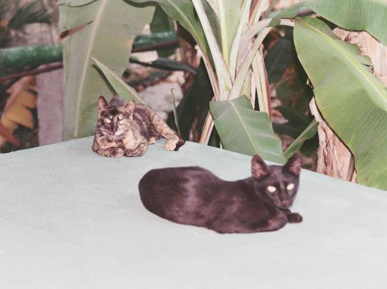 Hotel Posada Sian Ka'an: the posada sian ka'an cats