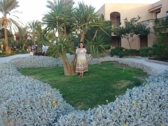 Ali Baba Palace Photo