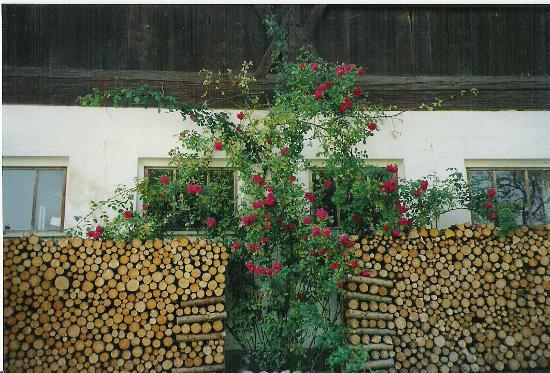 Pension Schlosserhof: Love their flowers