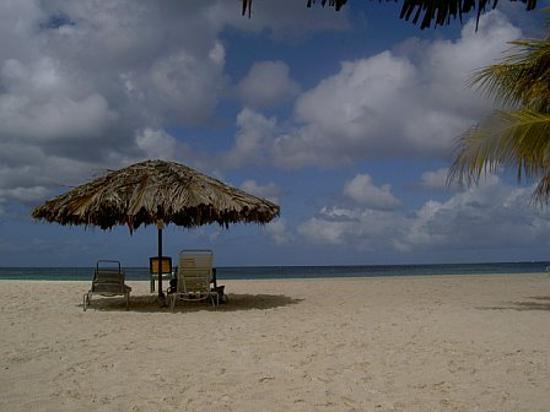 Bucuti & Tara Beach Resort Aruba : View from my lounge chair