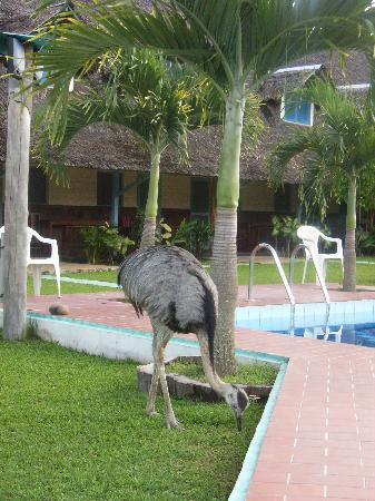 Hotel Rurrenabaque: Hotel Safari, pool and