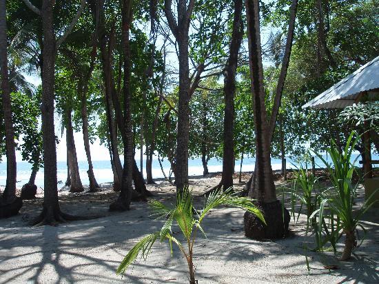 Milarepa: Ocean View