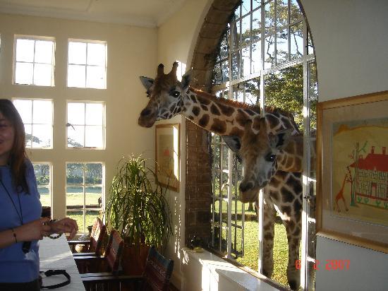 Kenya: Giraffe Manor