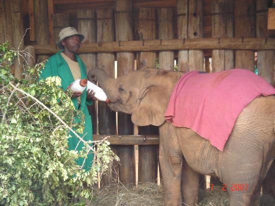 Kenya: Elephant orphanage Nairobi