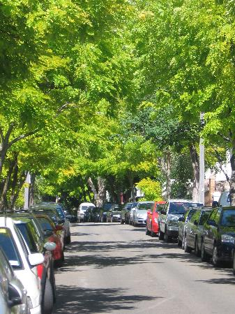 Chelsea Guesthouse: beautiful tree-lined street