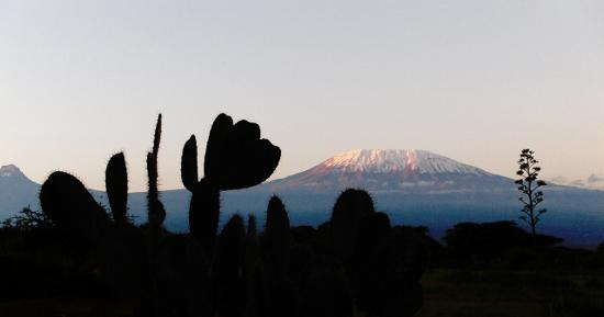 Amboseli Sopa Lodge: Kilimanjaro sunrise