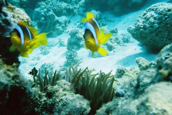Hyatt Regency Sharm El Sheikh Resort: we found nemo!
