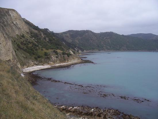 Каикоура, Новая Зеландия: View from the point towards Kaikoura.