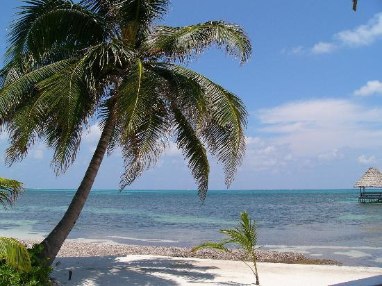 Ambergris Caye, Belize: Beautiful Belize