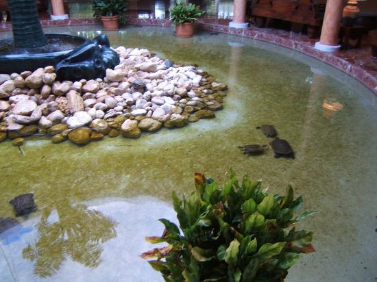 Turtle pound in lobby bassin a tortue dans le lobby de l - Bassin pour tortue aquatique villeurbanne ...
